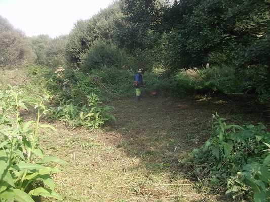 Sur le site du vallon sauvage de Quevert, la zone humide est entretenue, les végétaux caractéristiques sont préservés. 0